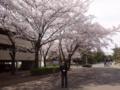 cherry blossom @ Tsukuba 2016/04/06