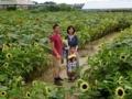 sunflower maze @ Tsukuba 2017/08/05