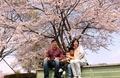 Cherry blossoms @ Tsukuba 2019/04/07