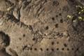 [volcano]Pu'u Loa Trail Petroglyph