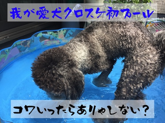 f:id:im_kurosuke:20201019085123j:plain