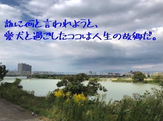 f:id:im_kurosuke:20201024204543j:plain