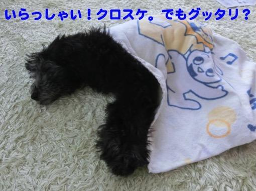 f:id:im_kurosuke:20201110225003j:plain