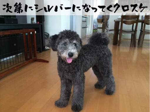 f:id:im_kurosuke:20201110225045j:plain