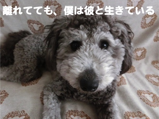 f:id:im_kurosuke:20201110225129j:plain