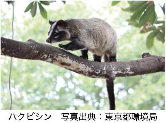 f:id:im_kurosuke:20210624225949p:plain