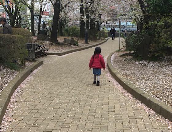 葉桜の公園で早朝の散歩