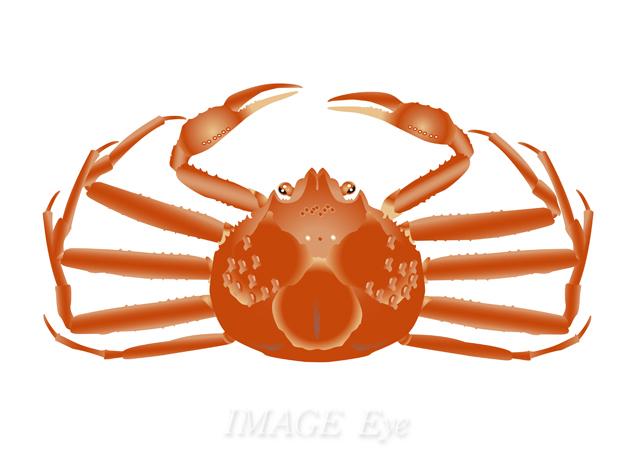 f:id:imageeye-illust:20201201103011j:plain