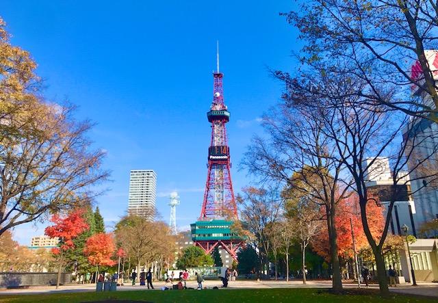 青空に映えるテレビ塔と色付く街路樹