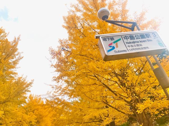 地下鉄の駅を出た瞬間から鮮やかに色付いたイチョウ並木がお出迎え