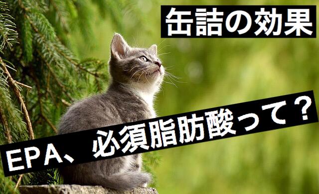 f:id:imaikiaruku:20171020065631j:plain