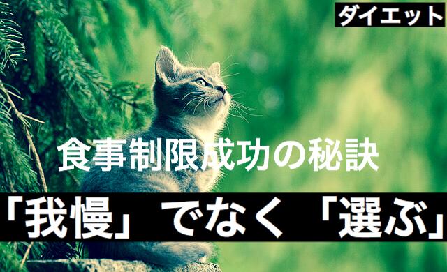 f:id:imaikiaruku:20180126192948j:plain