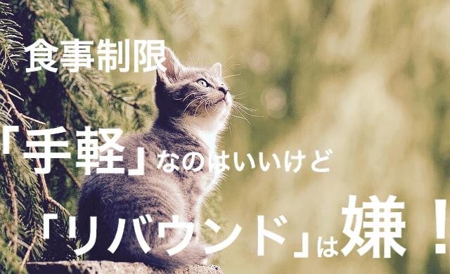 f:id:imaikiaruku:20180126193004j:plain