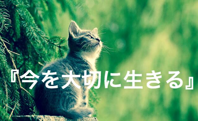 f:id:imaikiaruku:20180207165045j:plain