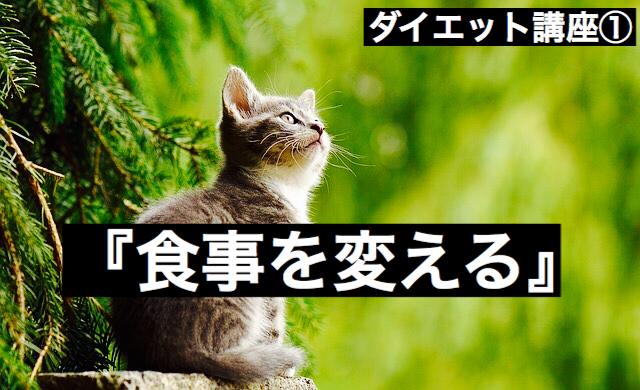 f:id:imaikiaruku:20180222185807j:plain