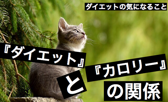 f:id:imaikiaruku:20180224204414j:plain