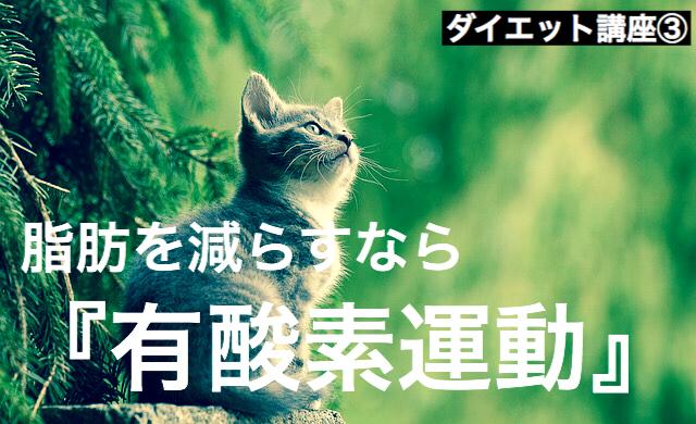 f:id:imaikiaruku:20180225195125j:plain