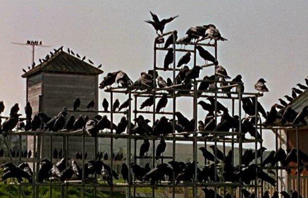 鳥, The Birds