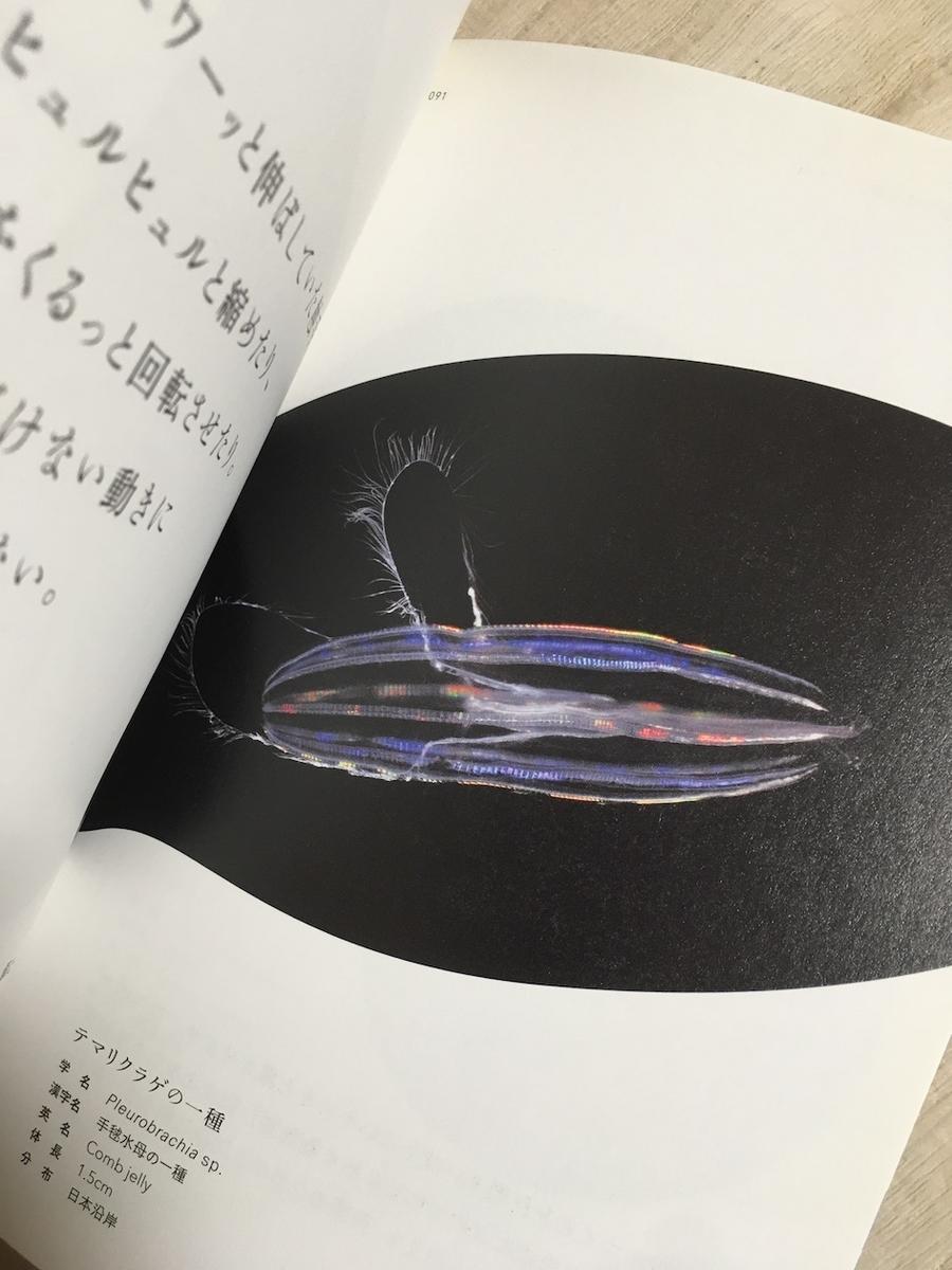 えのすい 愛しのクラゲたち,新江ノ島水族館,えのすい
