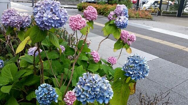 f:id:imanouchikun:20170611091238j:image