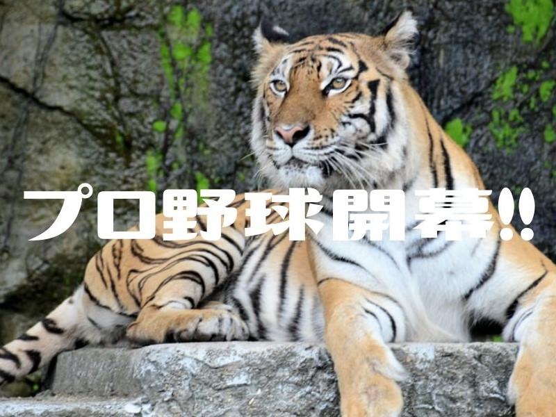 f:id:imaterasu:20200621150346j:plain