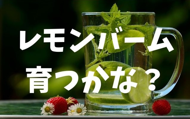 f:id:imaterasu:20200705151154j:plain