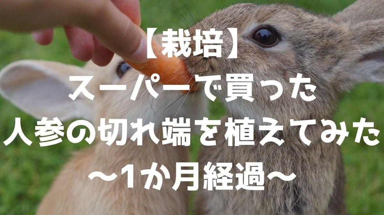 f:id:imaterasu:20210306162426j:plain