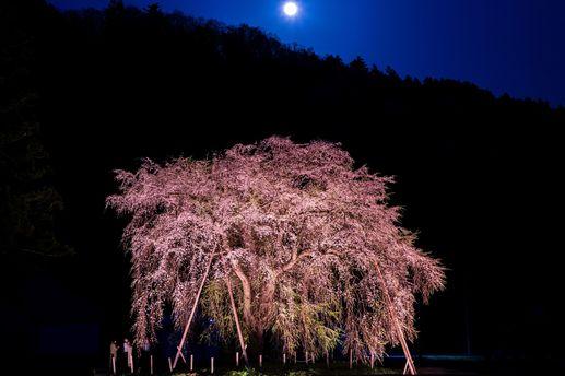 桜と梅の開花は、「温度上昇」と「積算温度」が関係しています。