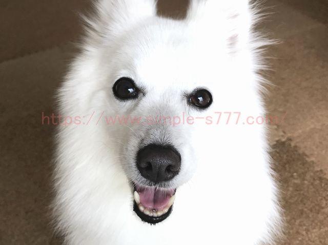 私の愛犬。「ご飯」「散歩」「飼い主と一緒の時間」だけで幸せそうです