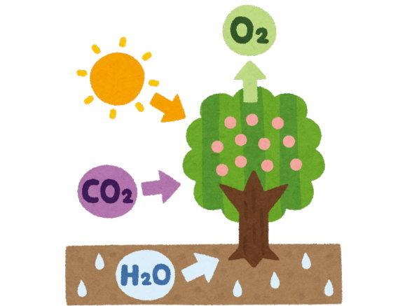 森林で作られた酸素は、その土地で消費されます