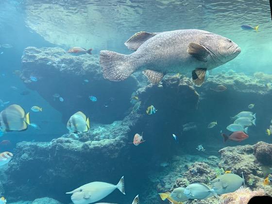 美ら海水族館の水槽内で泳ぐ熱帯魚たち