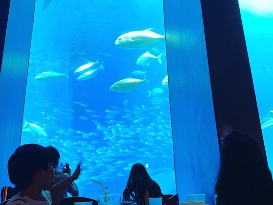美ら海水族館内のカフェの水槽