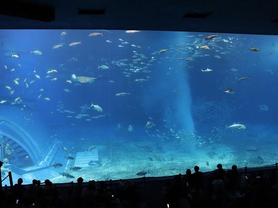 美ら海水族館内の黒潮の海の巨大水槽