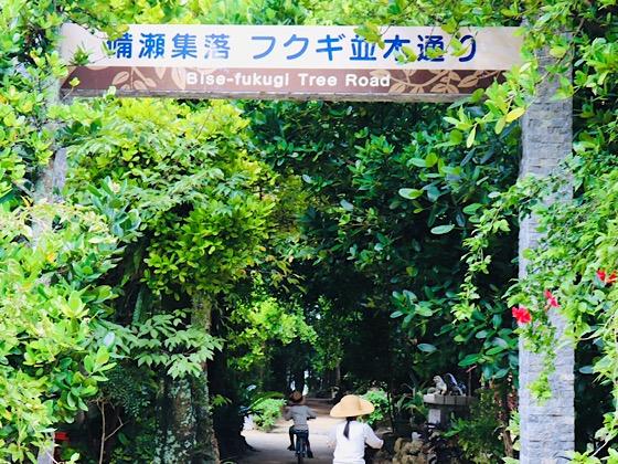 フクギ並木通り入り口