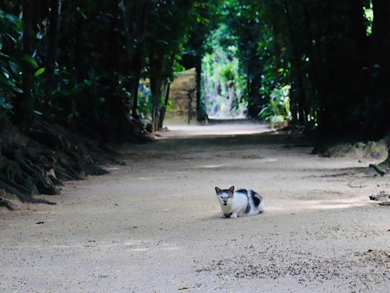 フクギ並木道に横たわる猫