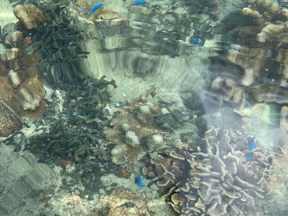 備瀬崎の海の水面に映る魚やサンゴ