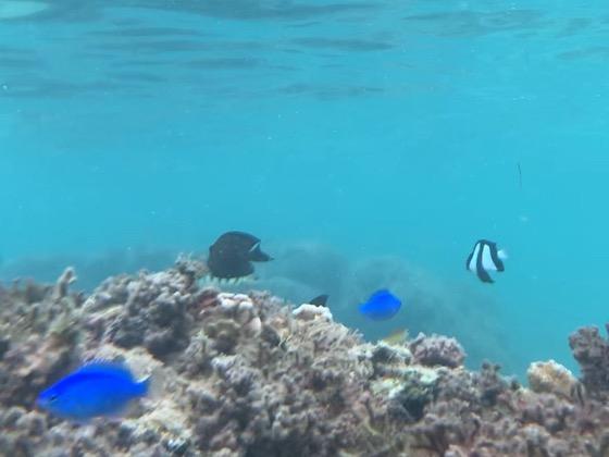 備瀬崎の海中の魚たち