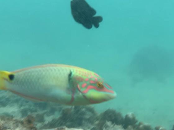 備瀬崎の海中のカラフルな魚たち