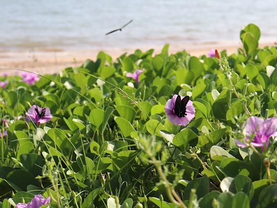 ペンションパパラギ王国プライベートビーチお花と蝶々