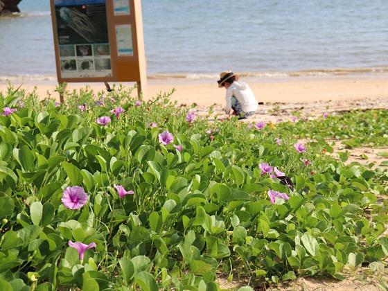ペンションパパラギ王国プライベートビーチ海と看板