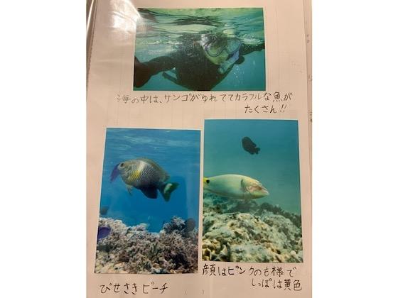 自由研究海の中の魚たちの写真