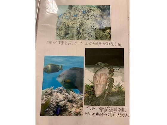 自由研究沖縄の海の生き物