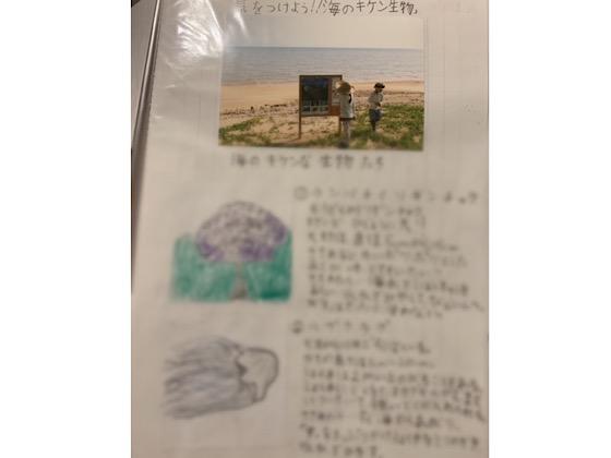 沖縄の海のキケン生物