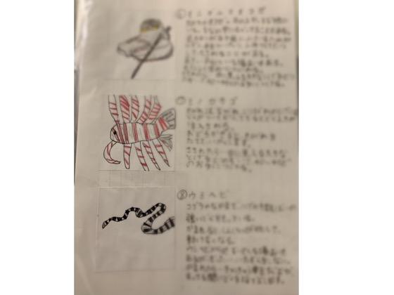 沖縄の海のキケン生物の一覧