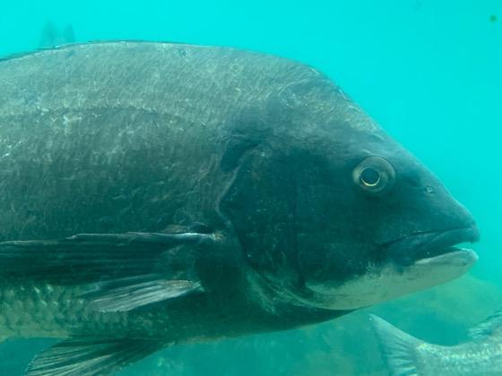 波戸岬玄海海中展望台内で見られる魚たち