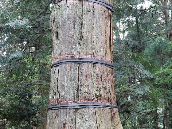 高千穂神社の木