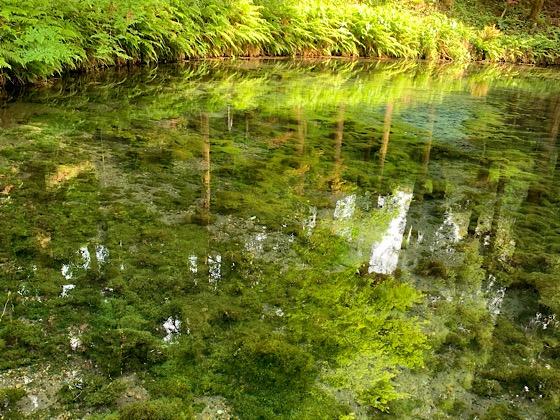 白川水源湧き水汲み場
