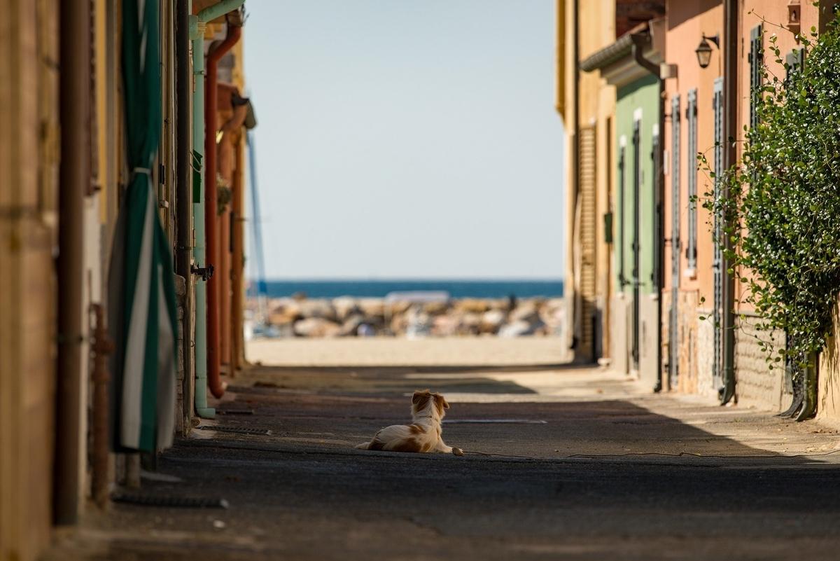 真昼の浜辺的な画像