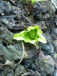 f:id:inakamongakkou:20110307161500j:image