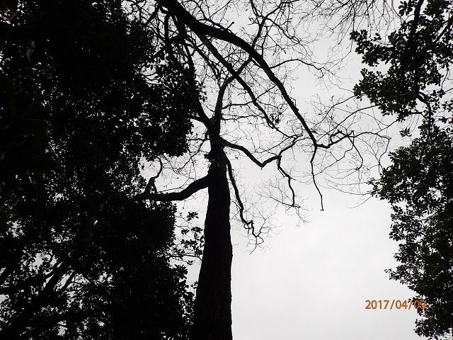 f:id:inakatano2:20170415091943j:plain